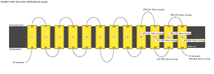 transmembrane domains